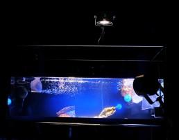 Wasser - Licht - Kunst - Installation